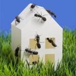 Mravi u kući – kako ih se riješiti?