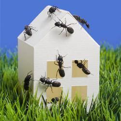 mravi u kuci